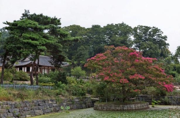 Сады. 정원