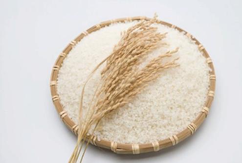 рис 쌀